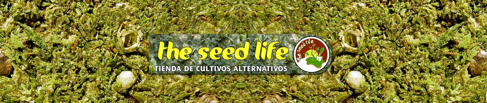/THE SEED LIFE - 01